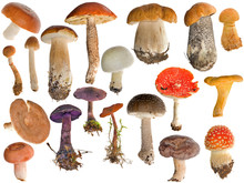 Nineteen Mushrooms Collection Isolated On White