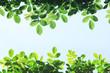 新緑のフレーム