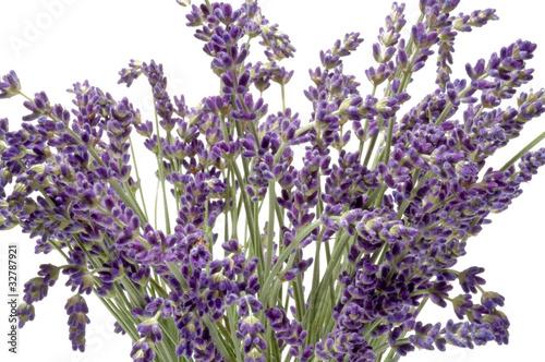 Cadres-photo bureau Lavende Lavendel-Blüten