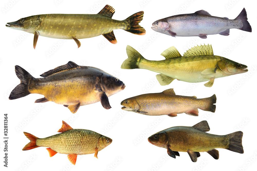 Valokuva  Fische 147