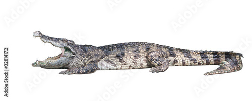 Foto op Canvas Krokodil Dangerous crocodile isolated on white background