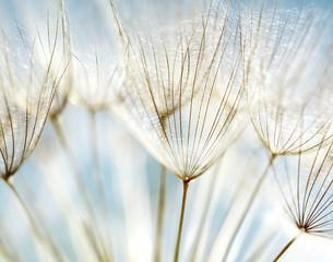 fototapeta abstrakcyjne tło kwiat mniszek