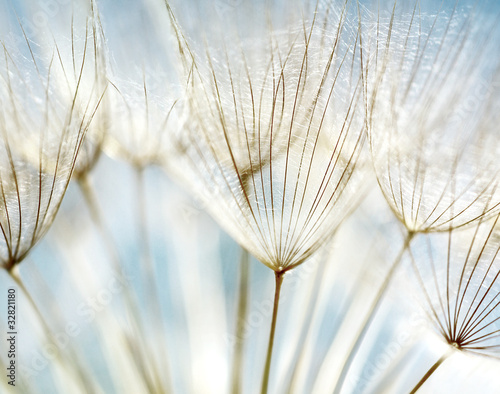 Foto op Plexiglas Paardenbloem Abstract dandelion flower background