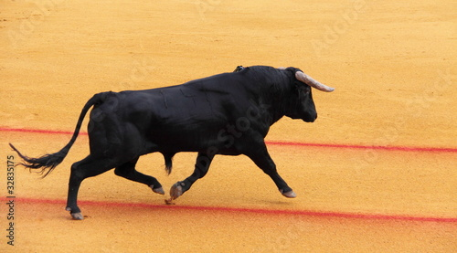 Wall Murals Bullfighting Taureau, corrida
