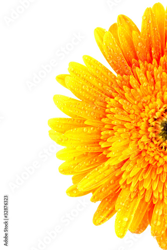 Tuinposter Gerbera Yellow gerber flower isolated on white