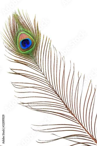 Papiers peints Paon Detail of peacock feather eye