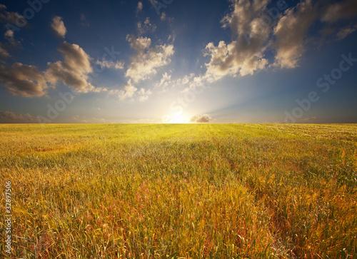 Canvas Prints Honey Field on sunset