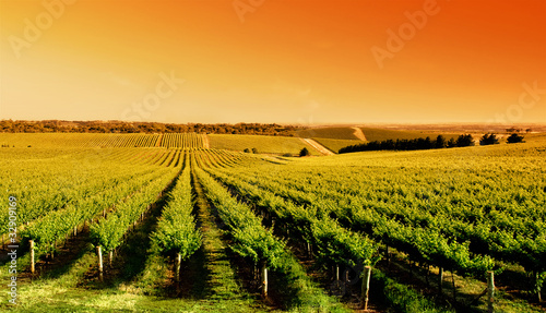 Papiers peints Vignoble Vineyard Sunrise