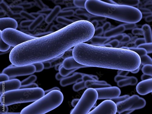 Photo  Escherichia coli Bakterium