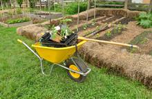 Yellow Wheelbarrow And Garden Tools