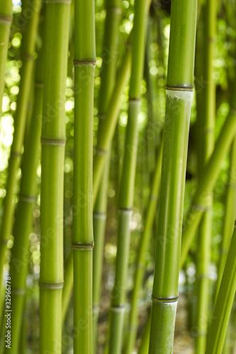 Naklejka premium Bambus 01