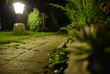 Nocny ogród