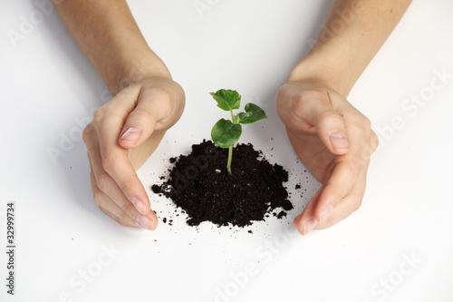 Fototapeta plant cover obraz na płótnie