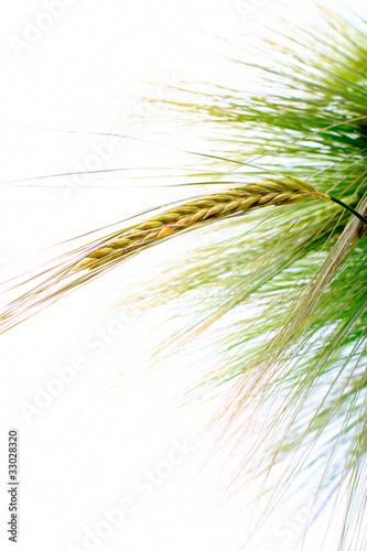 Getreide Canvas-taulu