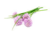 Chives And Chive Flowers Isola...