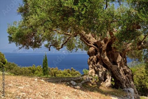Photo sur Aluminium Oliviers Griechische Inseln