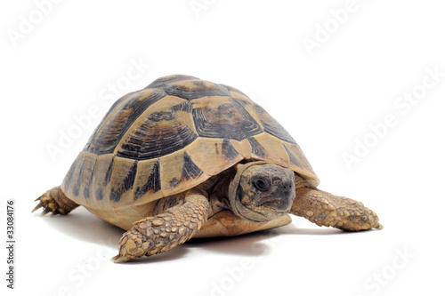 Foto op Canvas Schildpad tortue Hermann