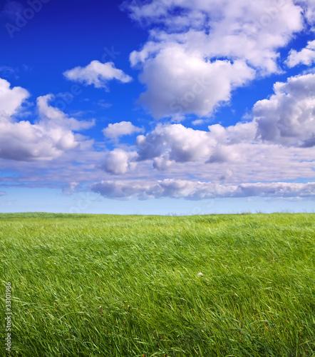 Tuinposter Purper Summer landscape