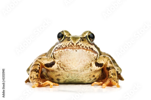 Photographie frog