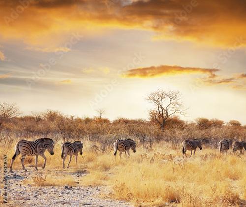 Foto op Plexiglas Afrika Safari