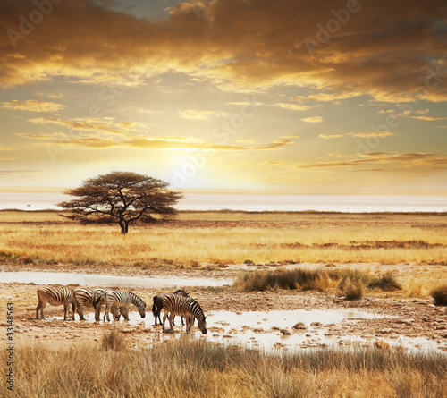Deurstickers Afrika Safari