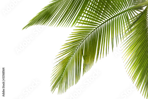La pose en embrasure Palmier Palm tree
