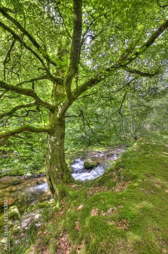 Foto op Plexiglas Groene Primavera en el bosque de muniellos.