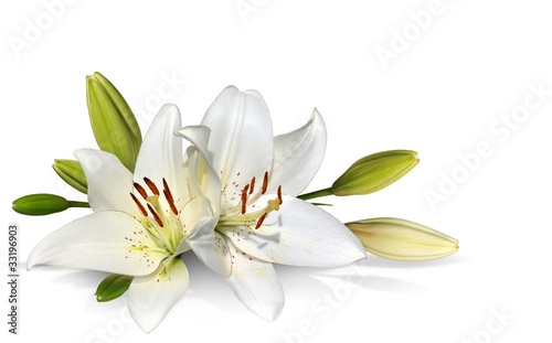 Fotografia  easter lily flowers on white background