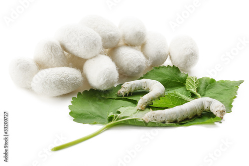 Silk Cocoons with Silkworm