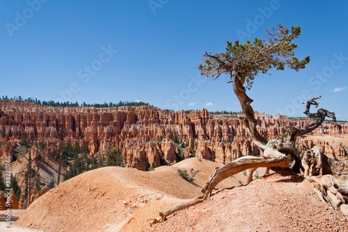 Valokuva  Lone tree
