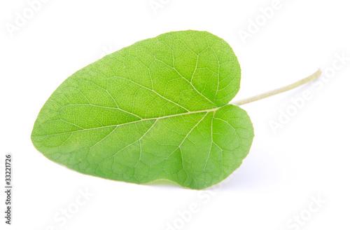 Wallpaper Mural one leaf of burdock