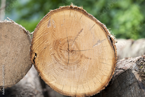 Fotografie, Obraz  Sezione orizzontale ottimo legno