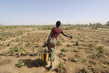 Fototapeta africa, mali, donna contadina