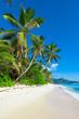 Panorama Palms Dream
