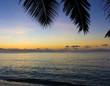 Palms Sunset Skyline