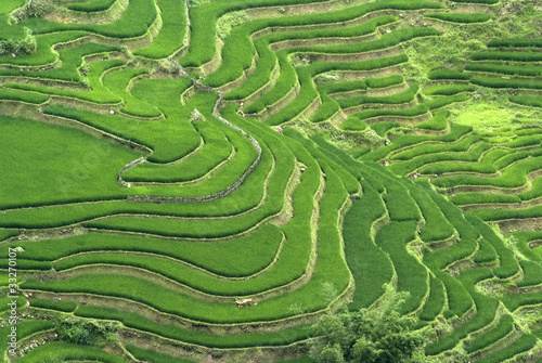 Poster Rijstvelden Terraced Rice Field