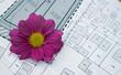 Bauplan mit Blume lila II