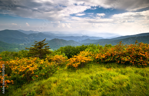 Papiers peints Montagne Flame Azalea Blooms Blue Ridge Mountains Roan Appalachian Trail