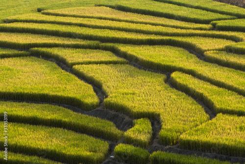 Foto auf Gartenposter Reisfelder Terraced Rice Field