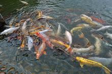 A Lot Of Beautiful Fishe