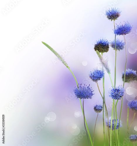 Foto op Canvas Lavendel Abstract Flowers Border Design