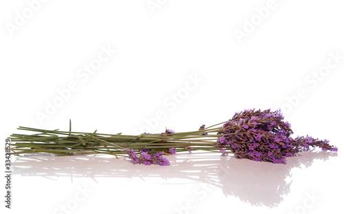 Foto op Canvas Lavendel lavande fraîche