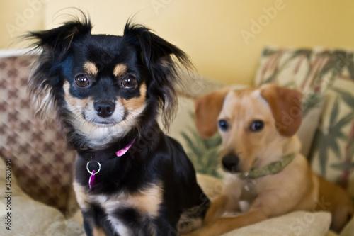 Spoed Foto op Canvas Hond Canine Friends