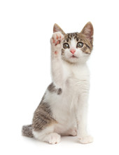 Cute Kitten Give High Five - I...