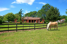 Pasture On A Horse Ranch With ...