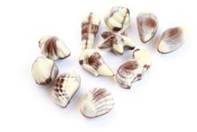 Chocolate Seashells