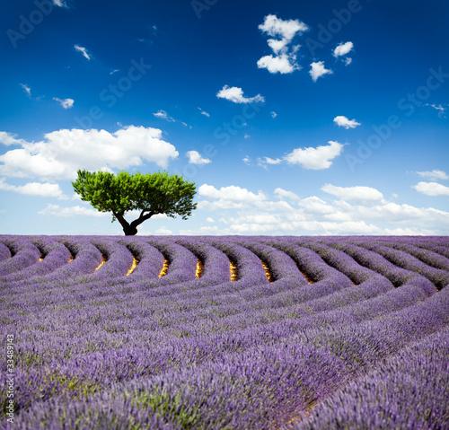 Foto-Kissen - Lavande Provence France / lavender field in Provence, France