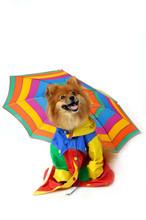Comical Canine Rainy