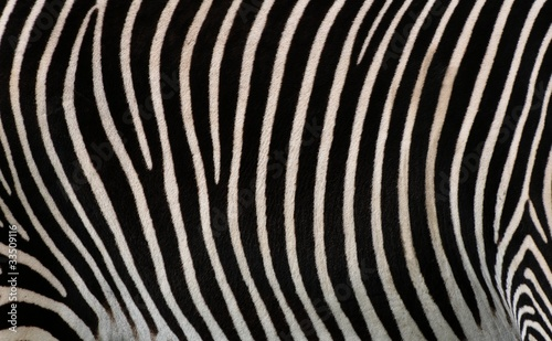 Cadres-photo bureau Zebra Details of zebra