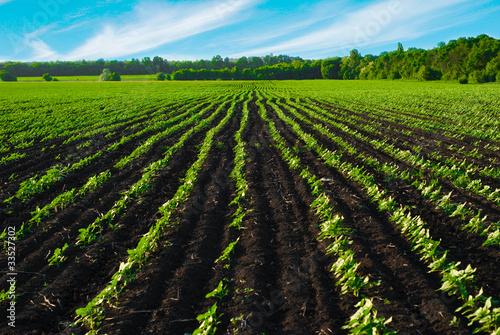 Foto auf Gartenposter Landschappen The field before the harvest